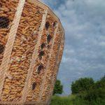 Во Франции построили эко-дом из кукурузы. ФОТО